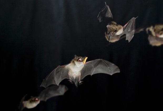 """Abertas inscrições para """"A Noite dos Morcegos"""""""
