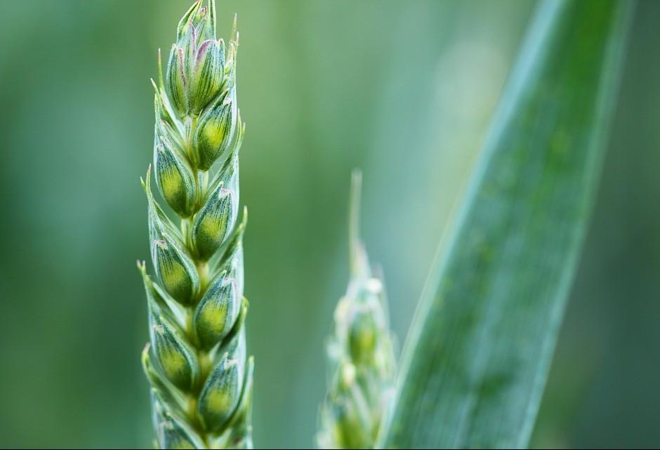 Agromitômetro mede os mitos da agricultura no país