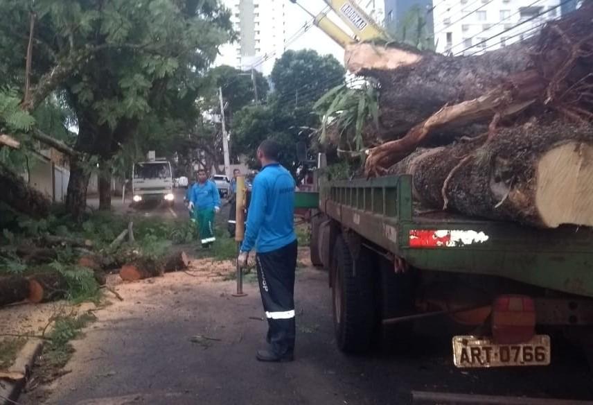 Das cinco árvores que caíram, quatro atingiram veículos