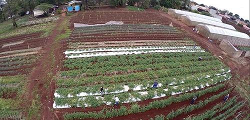 Olericultura é o tema do Dia de Campo da UEM
