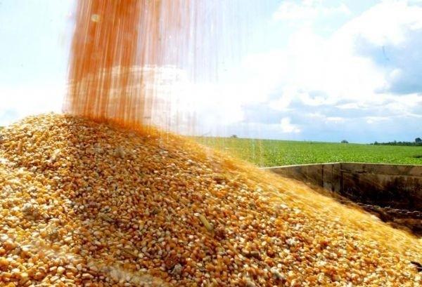 Saca do milho custa R$ 27,50 em Umuarama e Campo Mourão