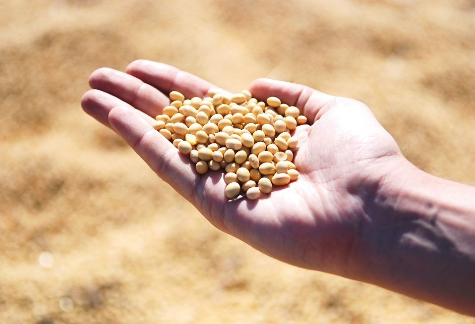 Saca da soja custa R$ 72