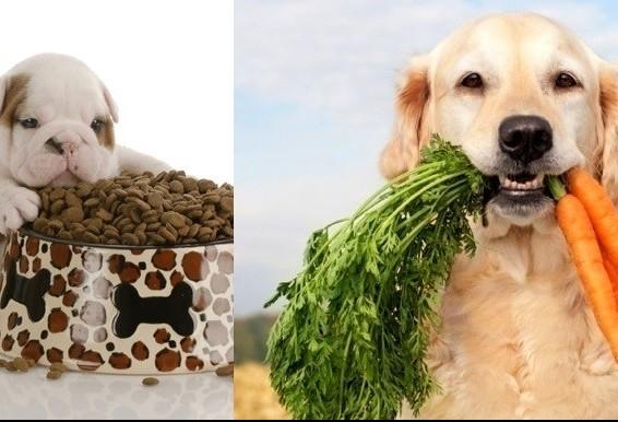Alimentação natural ou industrializada? Qual a melhor?