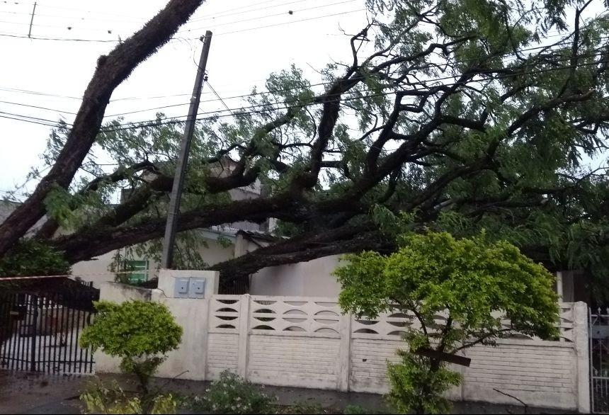 Queda de árvores deixa duas mulheres feridas em Maringá