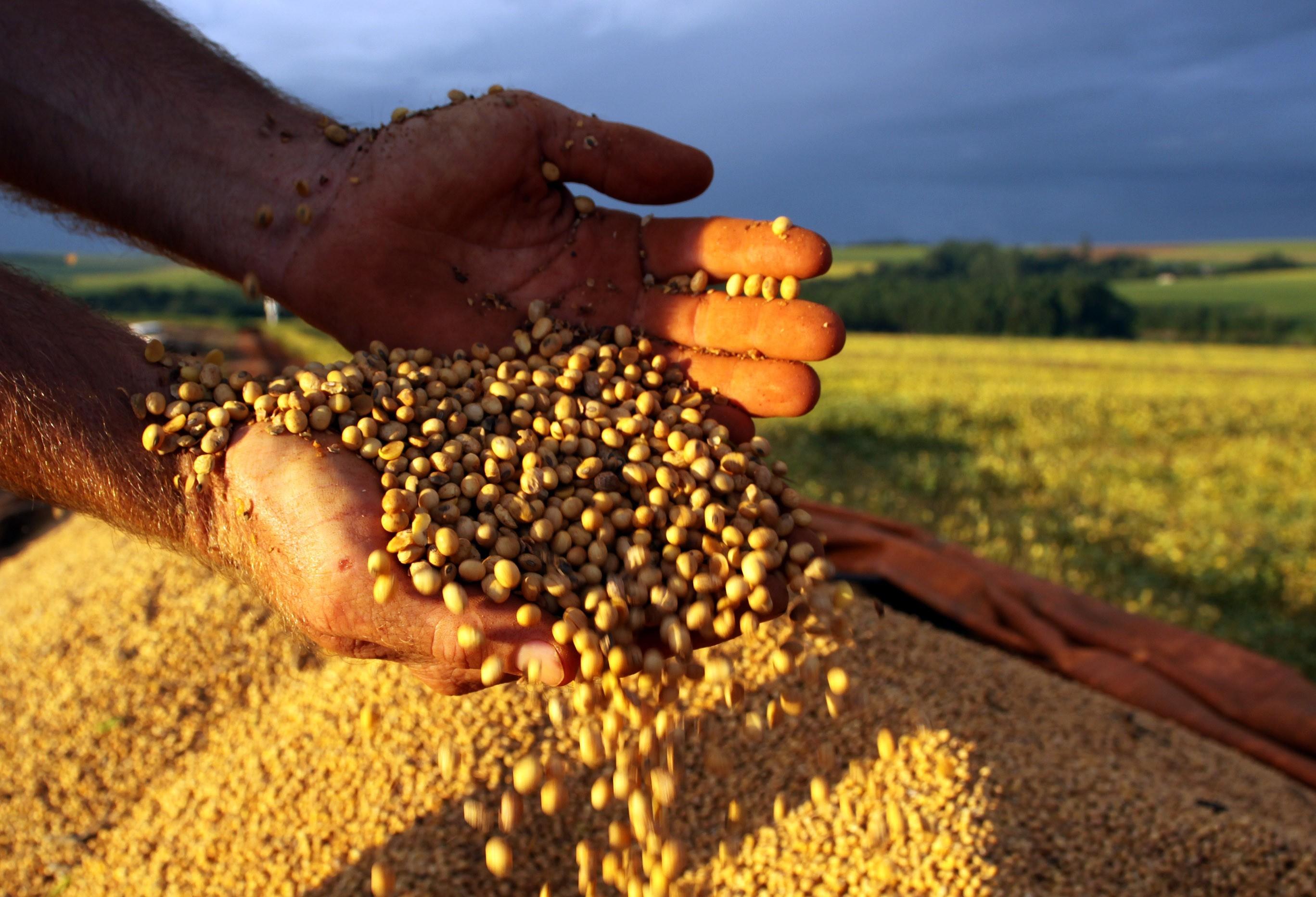 Brasil exportou mais de 8 milhões de toneladas de soja em 2019