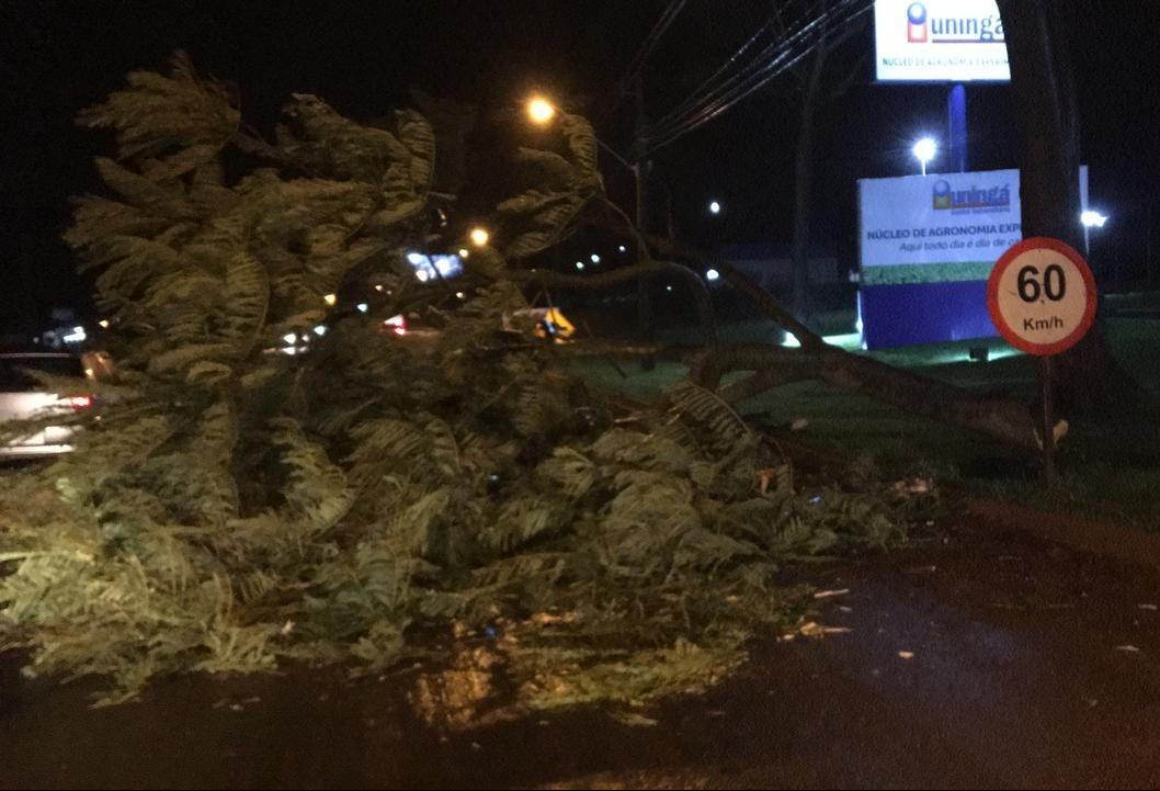 Defesa Civil registra queda de cinco árvores em Maringá