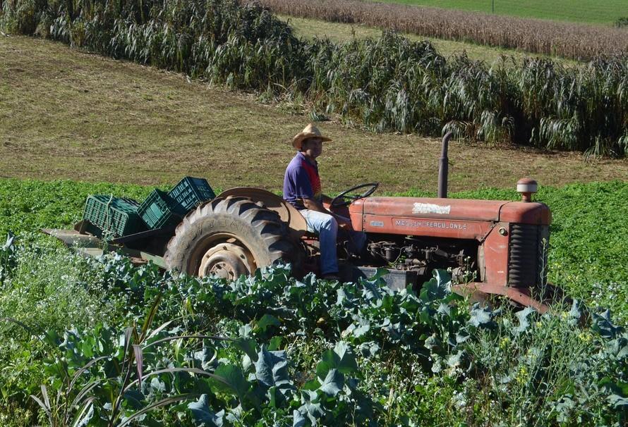 Pequenos agropecuaristas também aderem ao ILPF