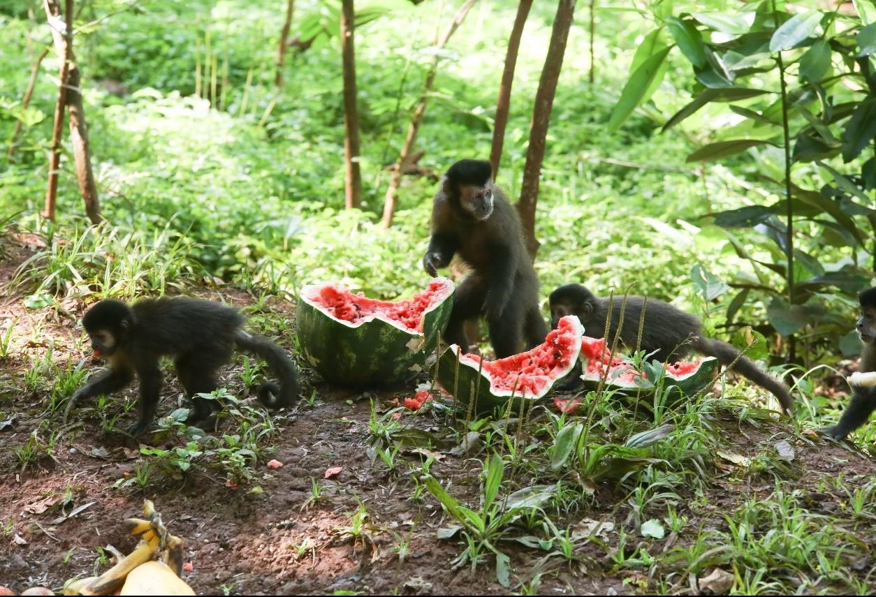 Sema economiza R$ 15 mil mensais com alimentação de animais silvestres