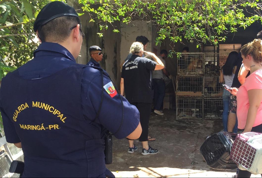 Gatos viviam em gaiolas em péssimas condições sanitárias