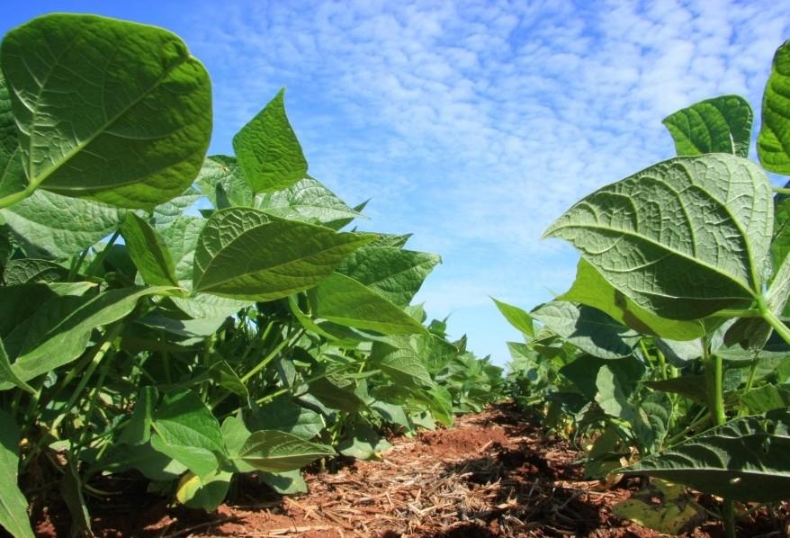 Clima ruim para plantio de milho pode levar produtores a plantarem soja nos EUA