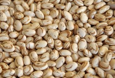 Safra de feijão sofre perdas no sul do estado