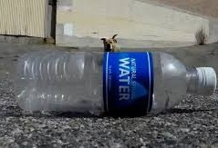 Você sabe o que acontece quando joga uma garrafa de plástico no chão?