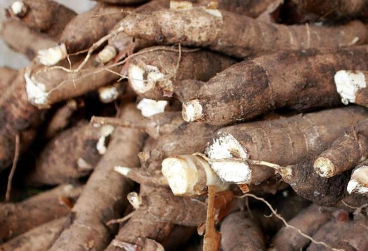 Tonelada da raiz de mandioca custa R$ 320 em Paranavaí