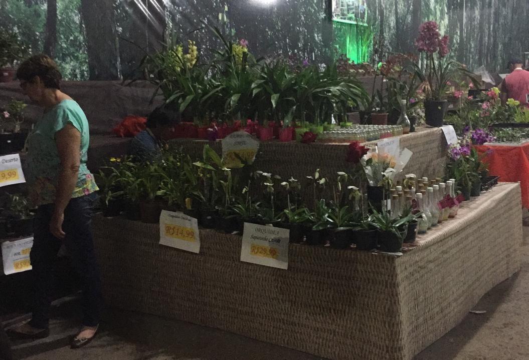 Produtores de flores da região participam da Expoingá
