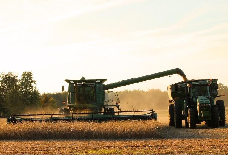 Produtores colhem soja e plantam milho