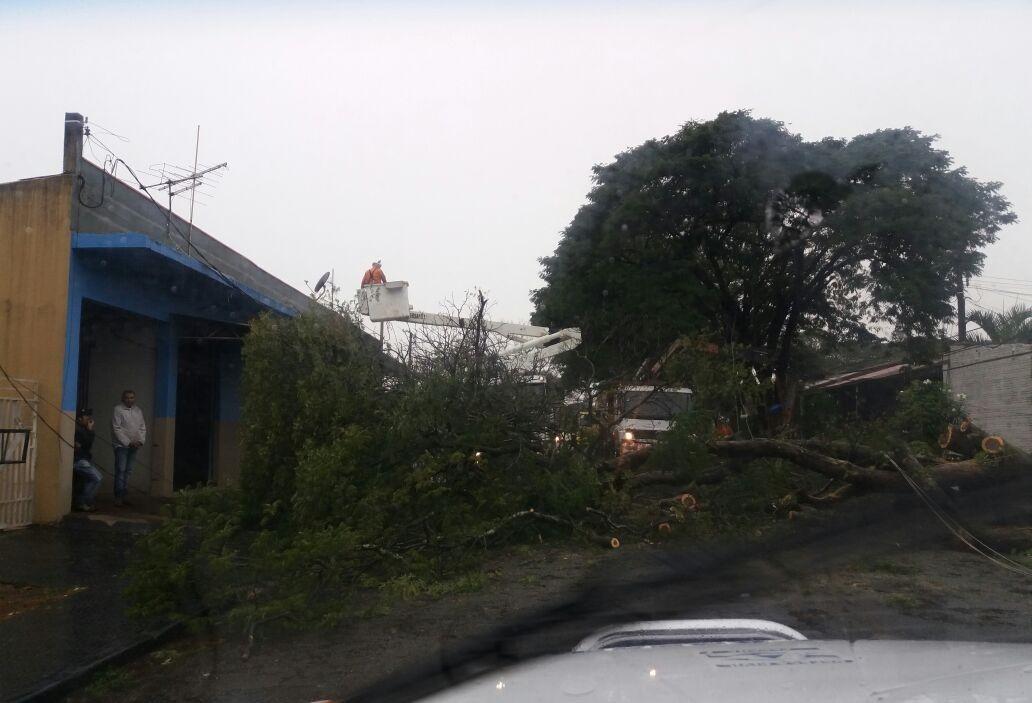 Chuva neste feriado provoca queda de quatro árvores e três postes em Maringá