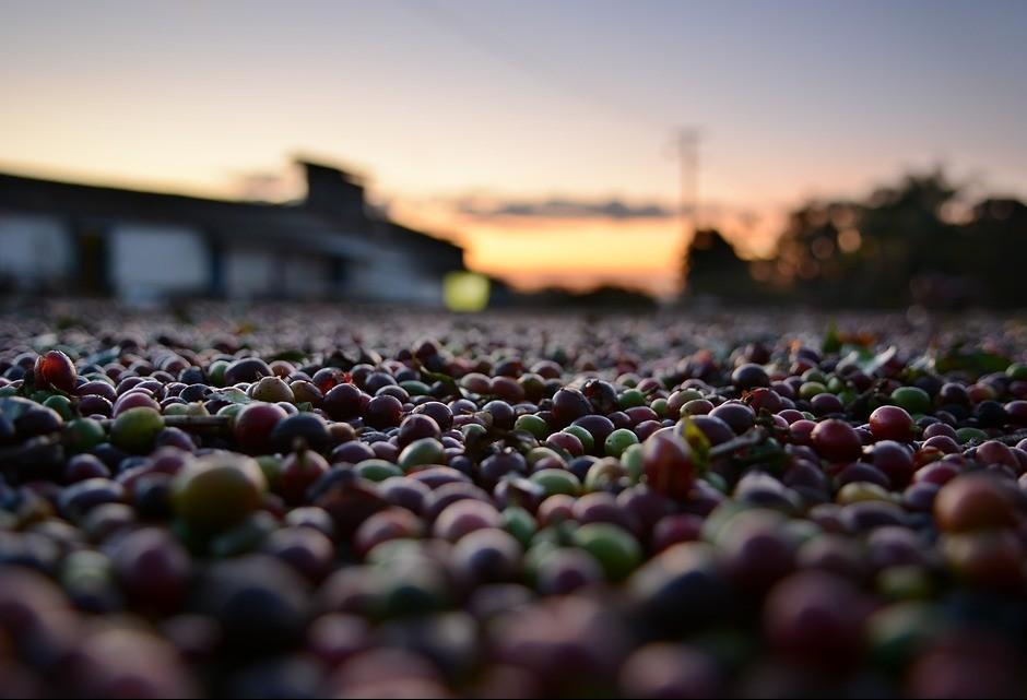 Preço do café tem aumento na região