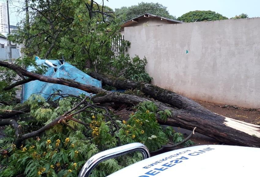 Temporal derruba mais de 100 árvores e deixa 10 mil sem energia