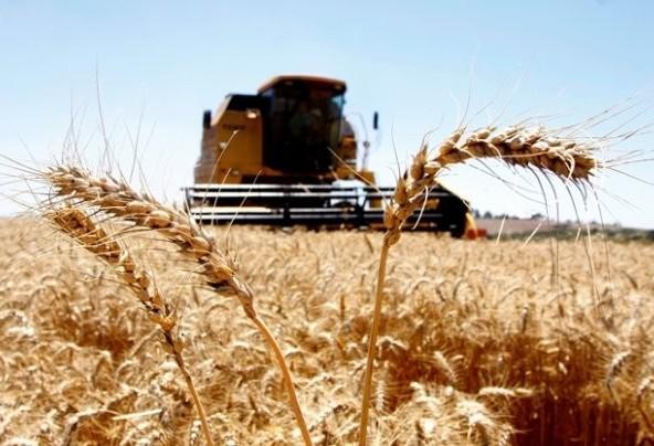 Condições climáticas podem favorecer o plantio do trigo