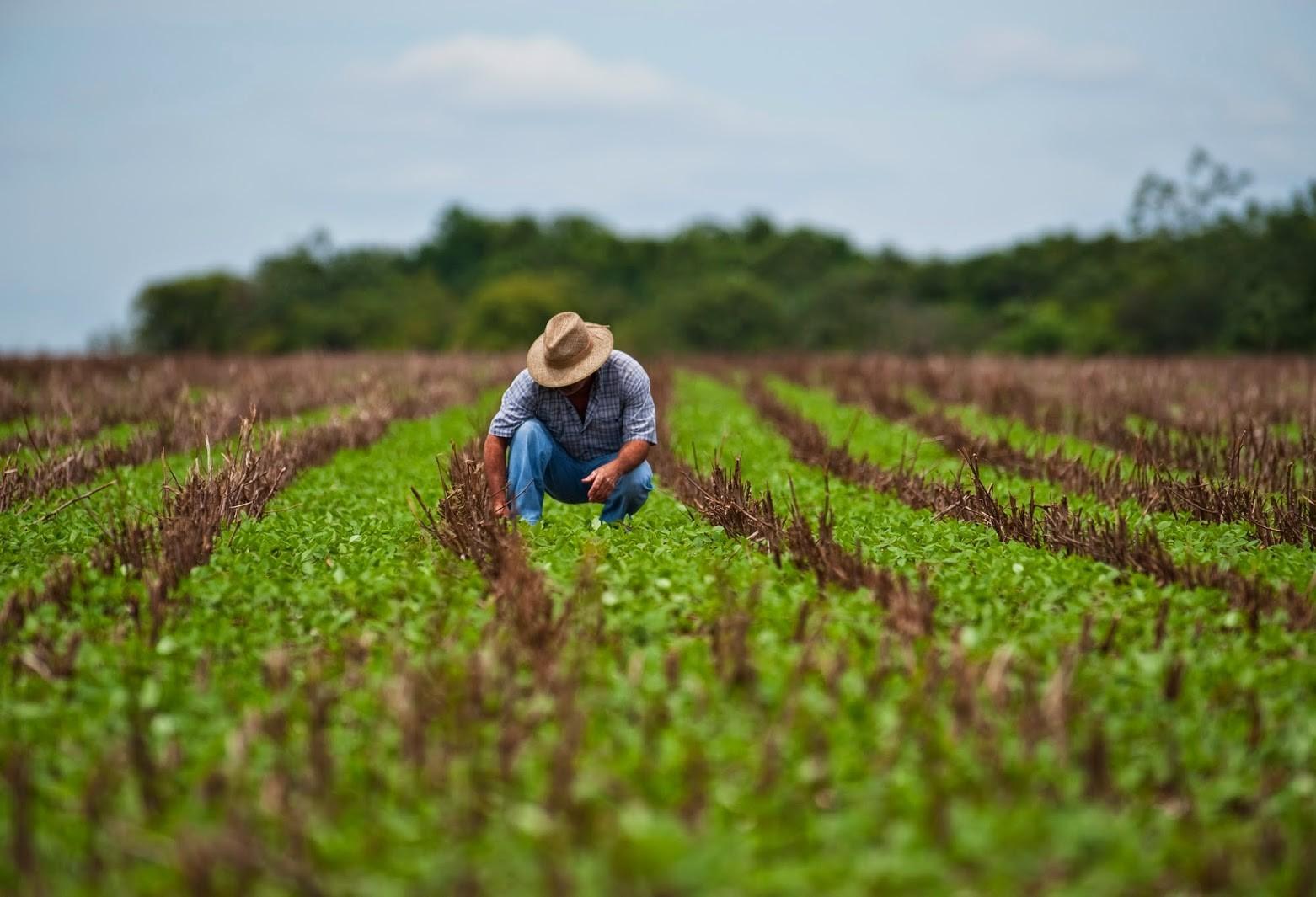 Governo do Paraná abrirá concurso para veterinários e técnicos agrícolas