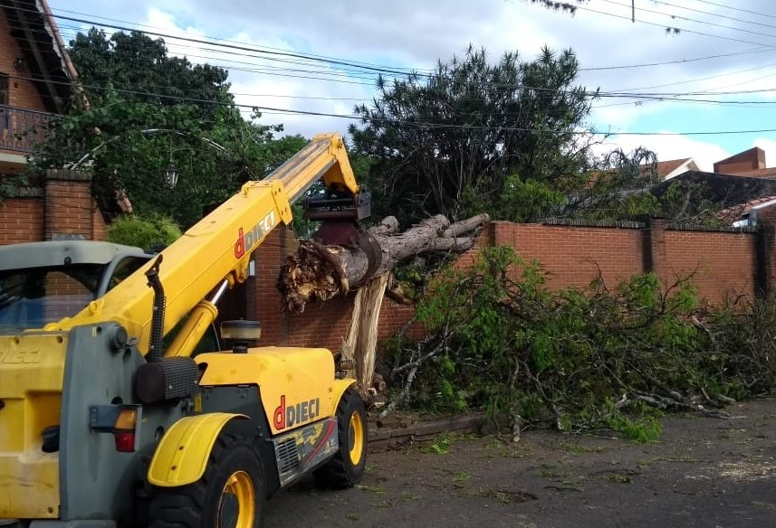 Número de árvores caídas por causa do temporal passa de 150