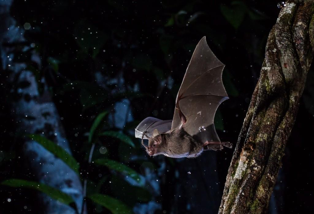Inscrições para 'A Noite dos Morcegos' estão abertas