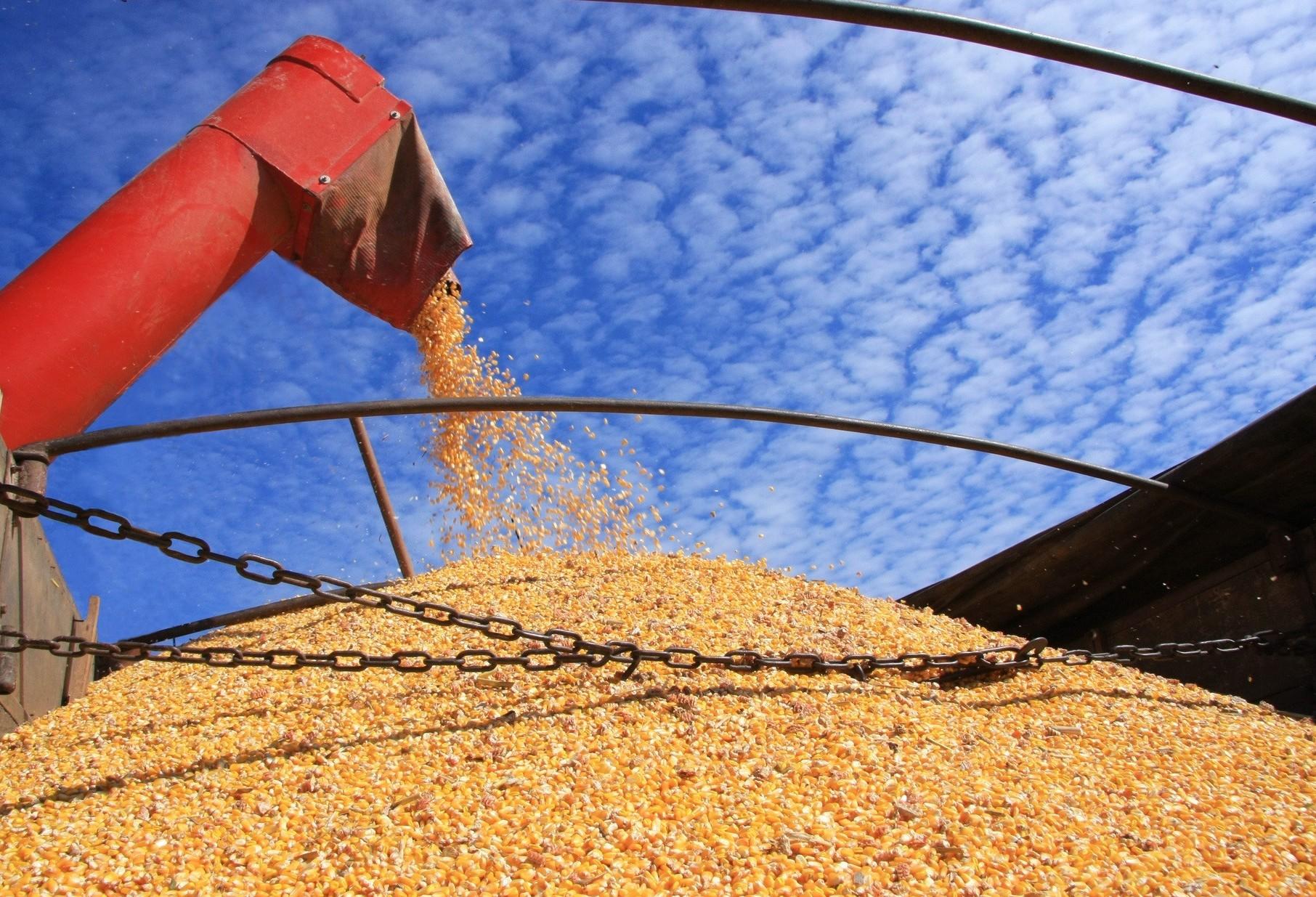 China volta a comprar soja do Brasil