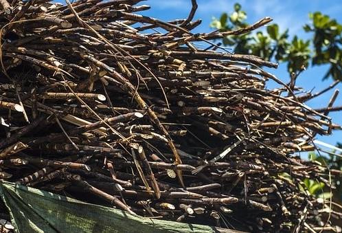 Processamento da cana-de-açúcar safra 2017/18 entra na reta final no Paraná