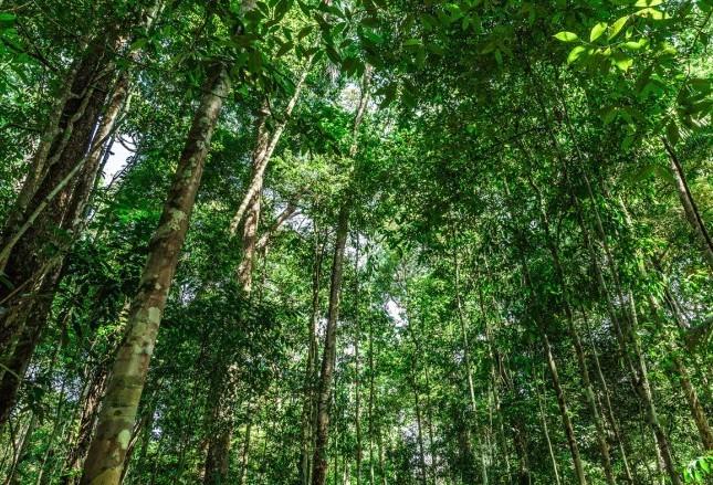 Sobre a Amazônia e polêmicas