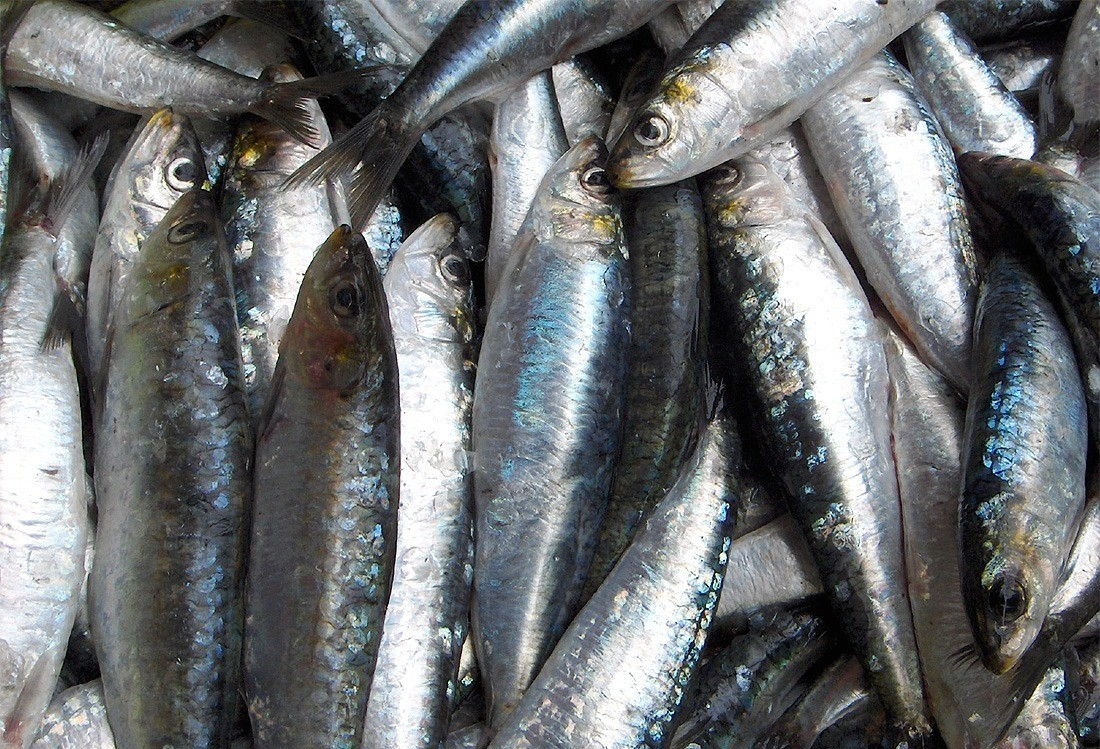 Pesquisa aponta variação de até 327% no preço dos pescados