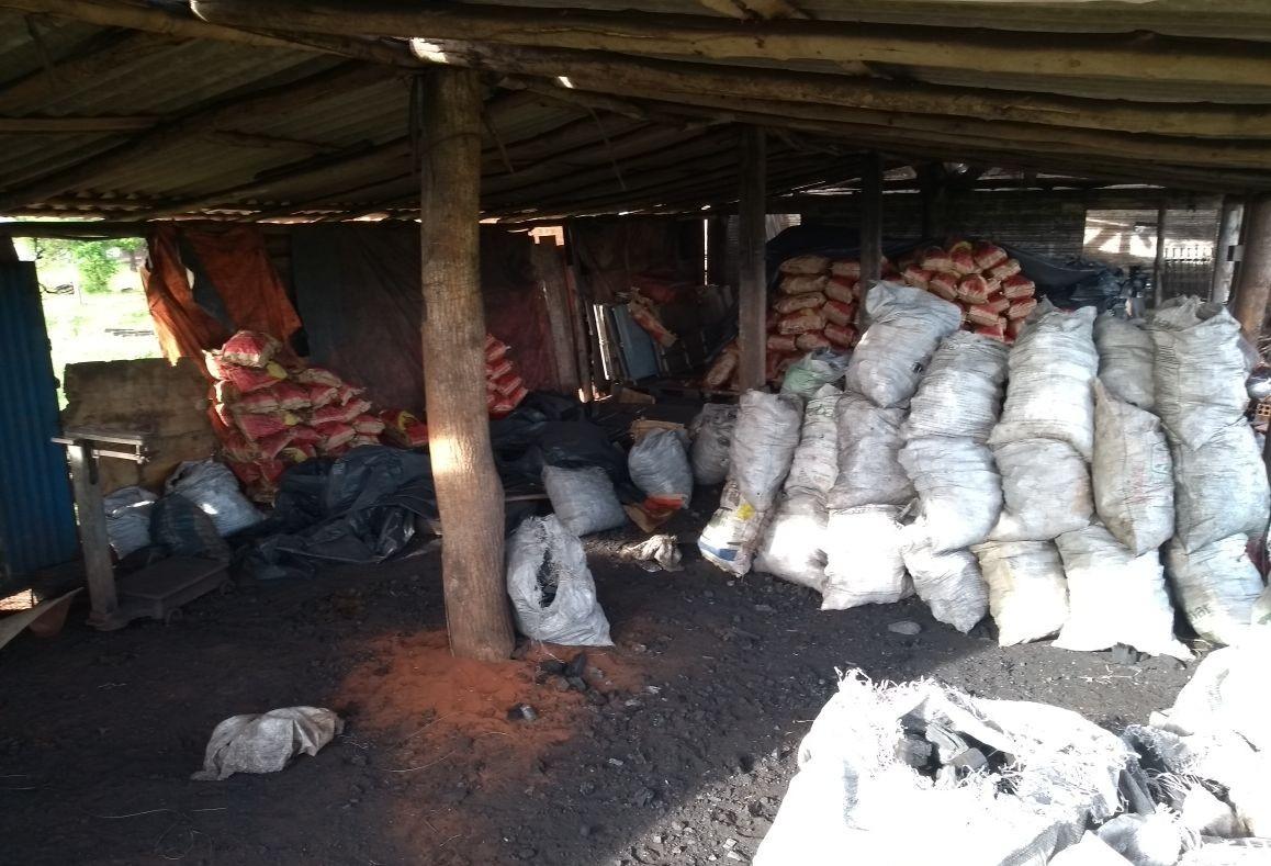 Polícia Ambiental apreende fornos de carvão vegetal