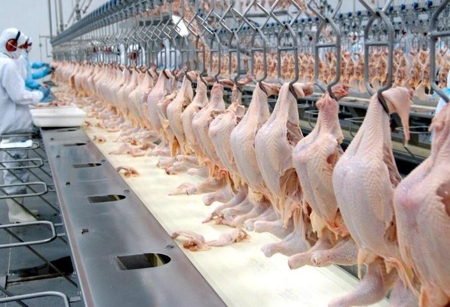 Exportação brasileira de carne de frango sobe 16%