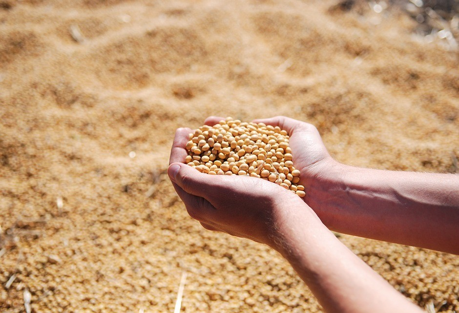Soja custa R$ 68,50 a saca em Maringá