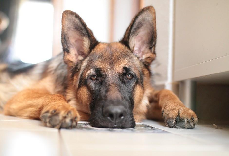 Organização realiza campanhas de conscientização sobre proteção de animais