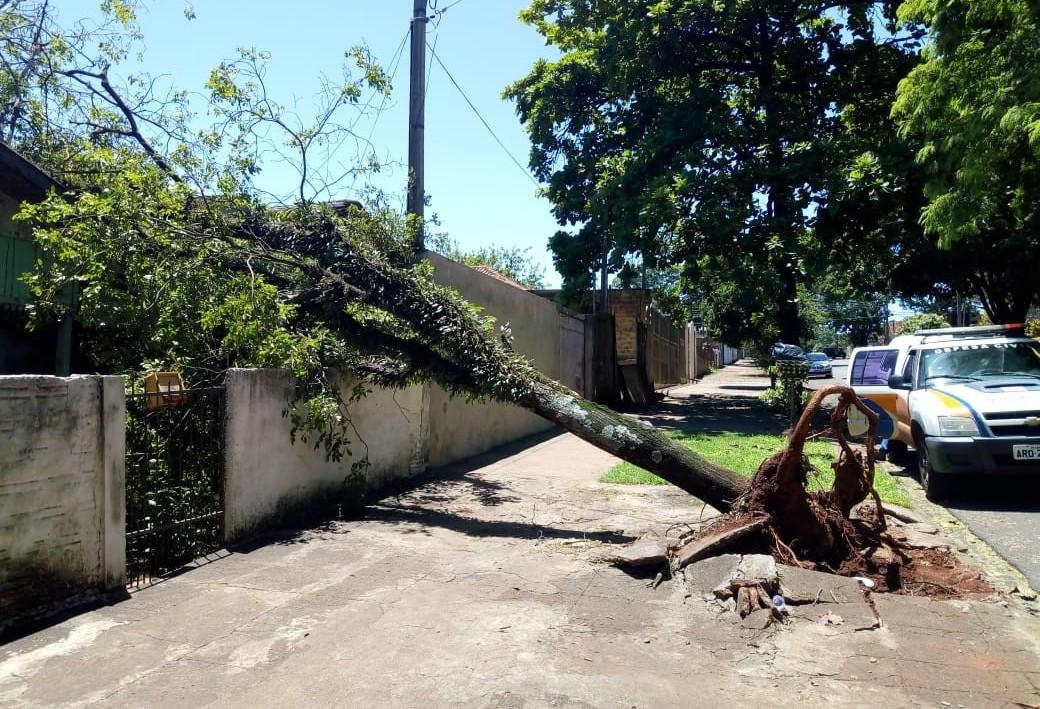 Maringá já gastou R$ 322 mil em indenizações por conta da queda de árvores