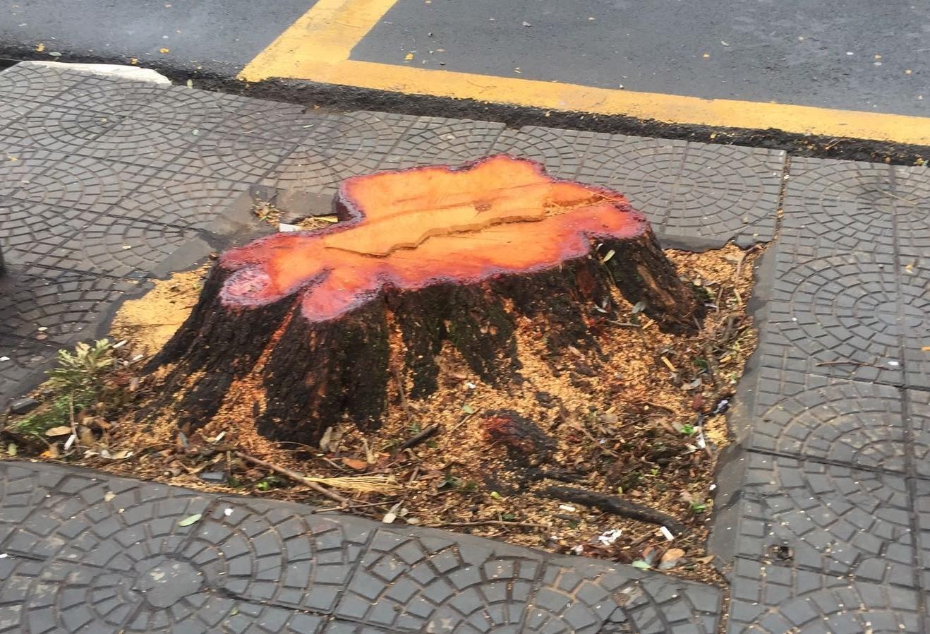 Árvore que ameaçava cair foi cortada