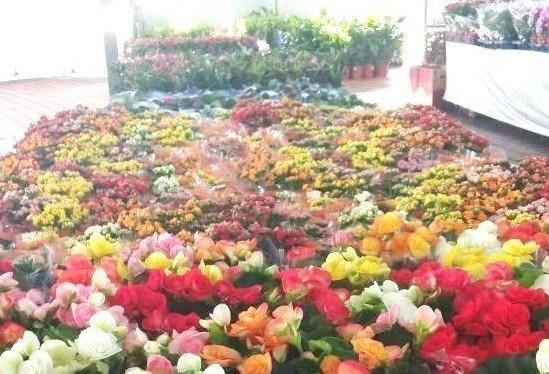 2ª Maringá Flores e Jardins encerra nesse domingo (24)