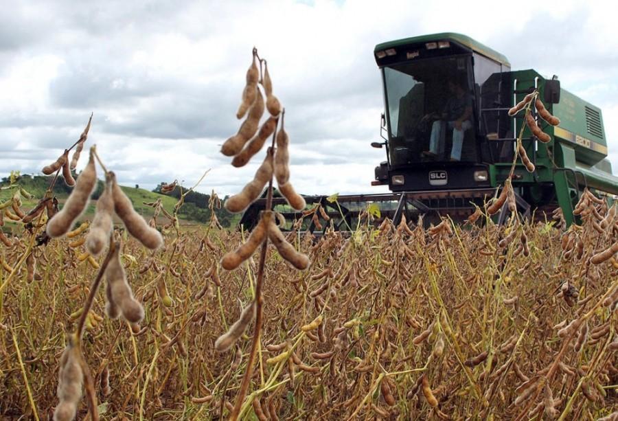 Produção de soja no Paraná reduz 14%