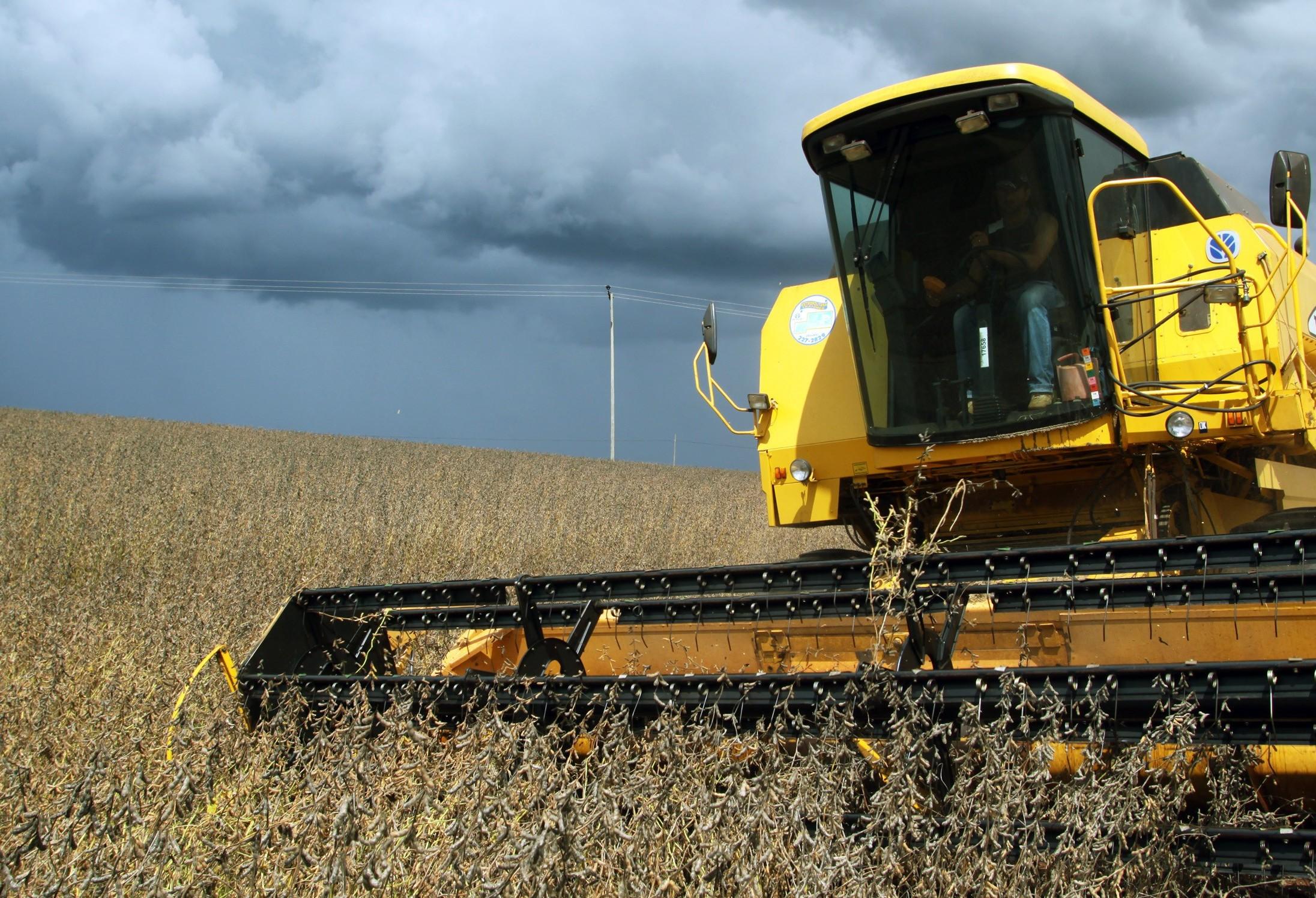 Com a colheita em andamento, preço interno da soja continua em queda