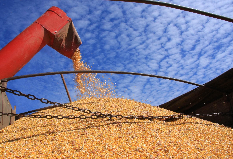 Queda nas cotações do milho na Bolsa de Chicago