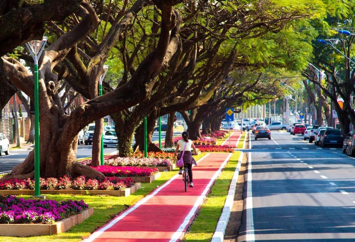 Plano de Arborização está pronto, mas ainda depende de aprovação