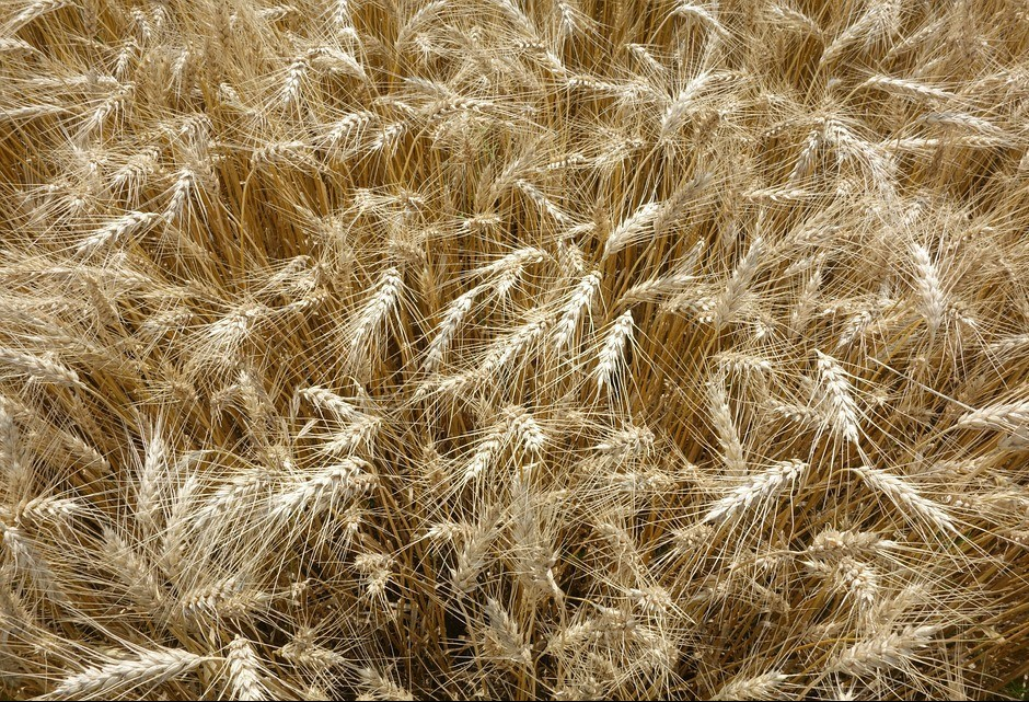 Semana termina com preços agrícolas estáveis