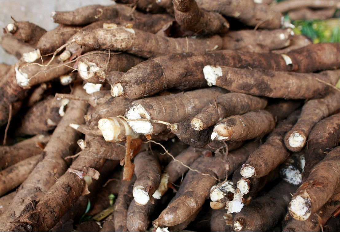 Tonelada da raiz de mandioca custa R$ 375 na região