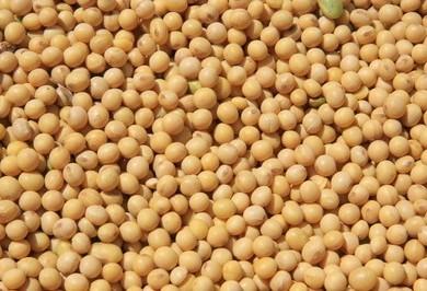 Preço da soja na bolsa de Chicago registra baixa de quase 0,04 de dólar