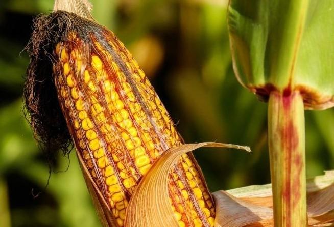Cotações de produtos agrícolas: terça-feira [24 de setembro]