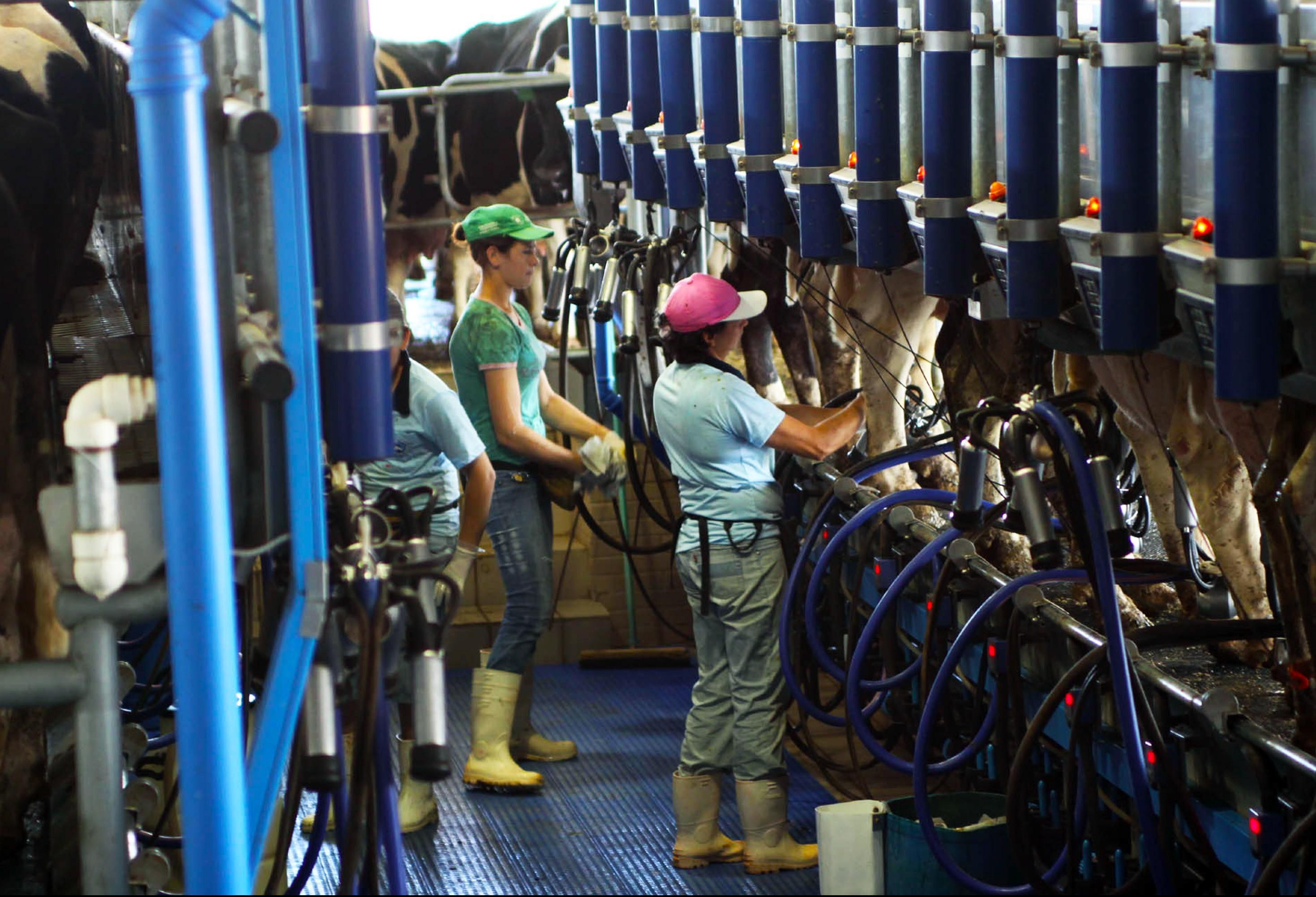 Preço do leite teve queda brusca na entressafra
