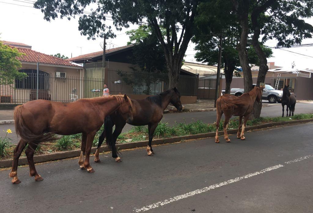 Prefeitura vai contratar uma empresa para recolher cavalos soltos