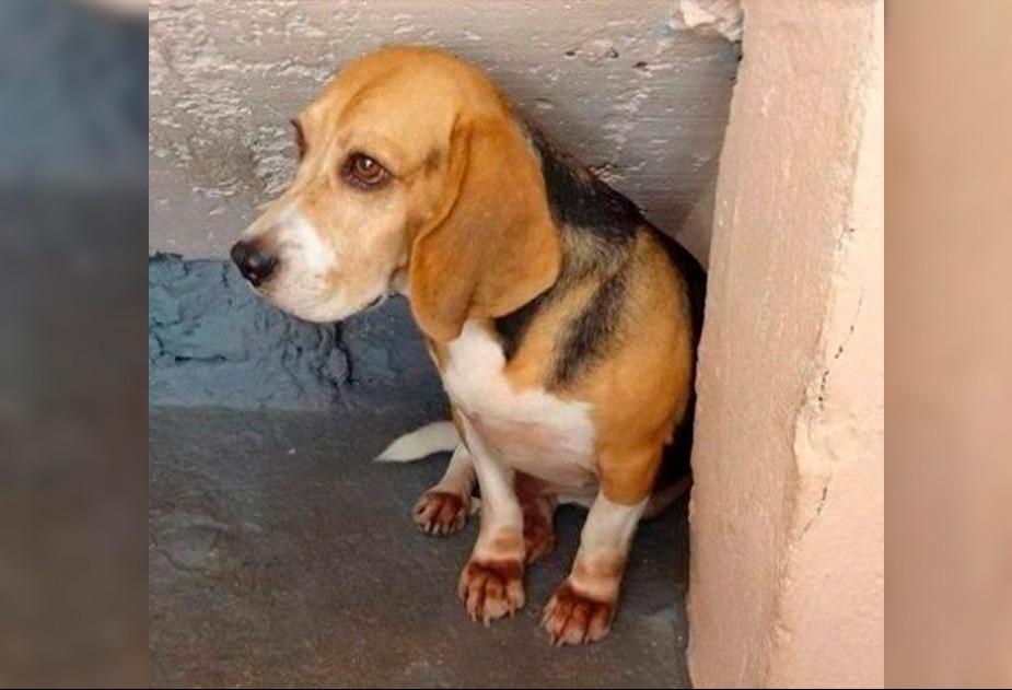 Justiça proíbe uso de animais em experimentos de odontologia da UEM