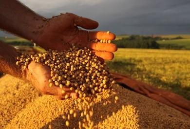 Valores da soja subiram em outubro