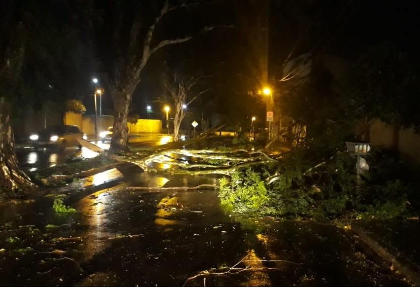 Chuva causa estragos em Maringá; 62 árvores caíram